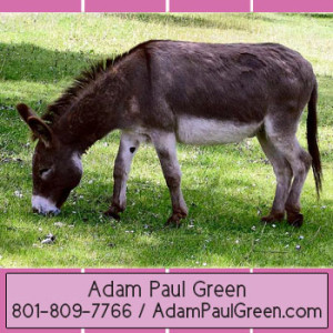 cute_AdamPaulGreen_graceful _Xocai_MXI_Corp_different _Health_Chocolate_calm